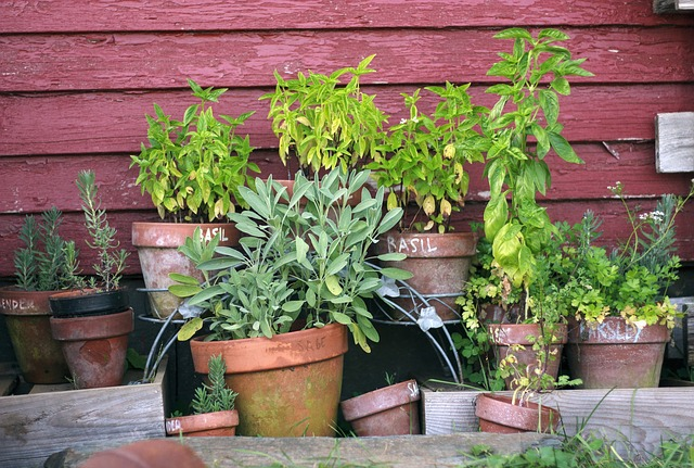 Aromatic herbs on the balcony